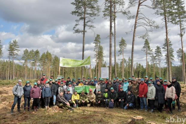 Депутат Жанна Чернявская приняла участие в республиканской акции «Неделя леса», приуроченной к Году народного единства